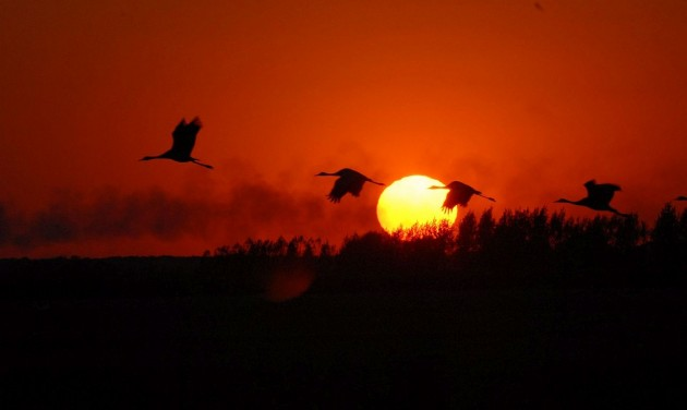 A természet látványos őszi ünnepe a Hortobágyon