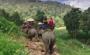 A turisták elmaradása miatt éheznek Thaiföld fogságban tartott elefántjai