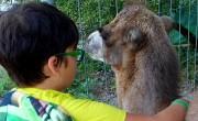 Állatpark nyílt Ráckevén