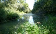 Visszanyerheti természetes élővilágát a Bezerédi-Duna-ág