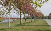 Klímabarát lesz a bécsi Duna-sziget