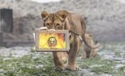 Ritka állatokkal és új látványossággal bővült a Nyíregyházi Állatpark
