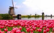 Az MTÜ felhívása amszterdami szakmai rendezvényen való részvételre