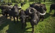 Magyarország újraindult – Lombkoronasétány, tanösvények és barlangtúra nemzeti parkjainkban