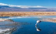 Madárürülék tette termékennyé a chilei Atacama-sivatagot