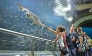 Fejlesztésekkel és vendégcsalogató kisfilmmel készül a nyárra a Tisza-tavi Ökocentrum