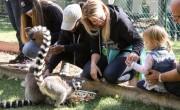 Magyarország újraindult – Éjszaki parádé a vidéki állatkertekben is