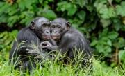 Lekerült a veszélyben lévő világörökségek listájáról a Salonga Nemzeti Park