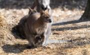 Zsebibaba nevelkedik a Debreceni Állatkertben
