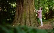 Erdőfürdőt kínálnak a Sárvári Arborétumban