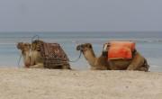Tunézia eltörli a karantént a csomagot foglaló nyaralóknak