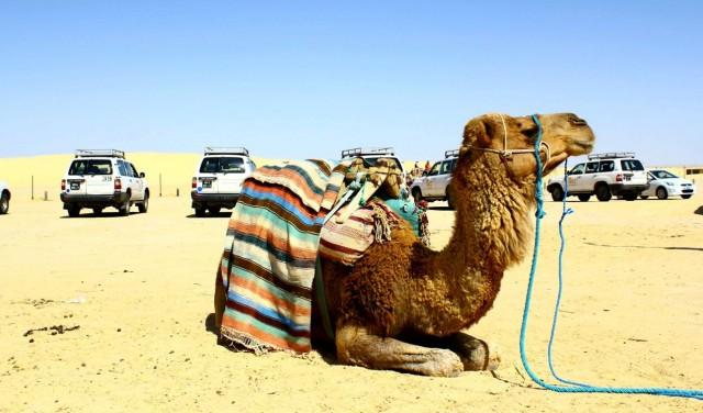 Tunézia, Djerba, kone, tenger, závod, strand, lovaglás, lovak