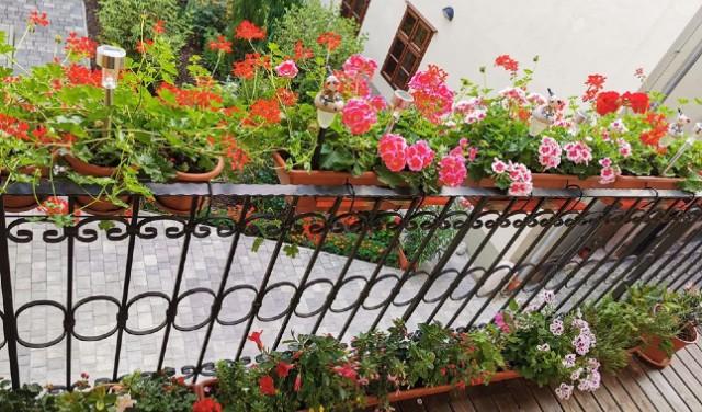 A közönség is szavazhat a legvirágosabb kertekre, balkonokra