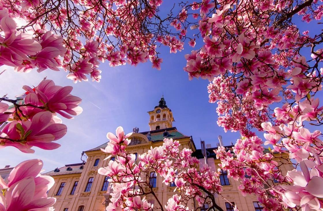 Belvárosi séták Szegeden