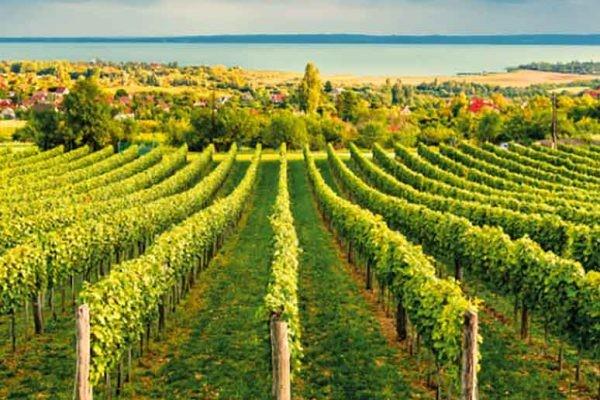 Ázsiaiak beutaztatása és a borturizmus a közös nevező