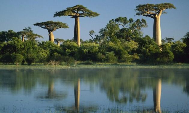Madagaszkár – őszintén a pestisről