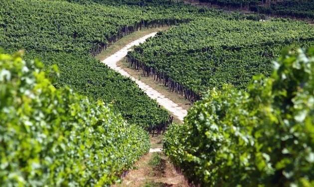 Előrébb tart a szőlőérés Villányban