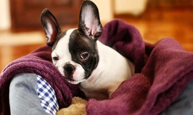 Söröző, ahol kutyát lehet örökbe fogadni