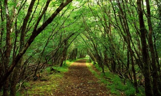 Erdők környezetvédelmére indult pályázat
