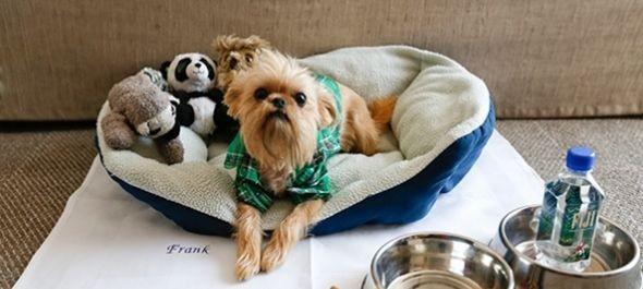 Kutatás a kutyabarát hotelekről
