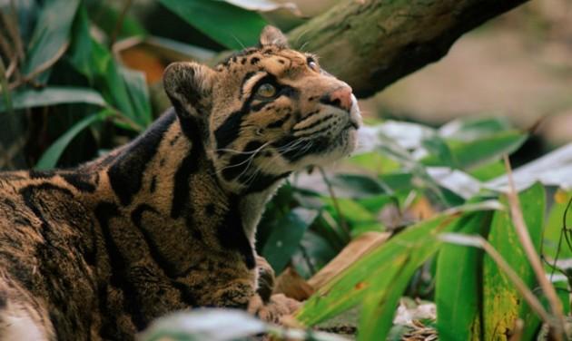 Akcióterv védené a Macskák földjét