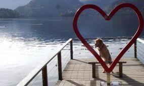 Új együttműködés a kutyabarát turizmus népszerűsítésére