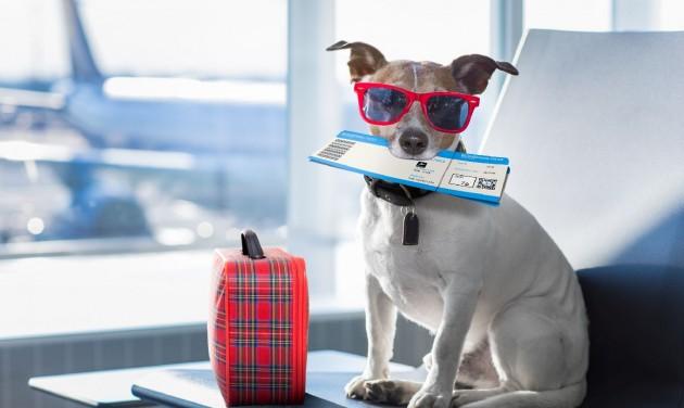 Repülős utazásnál a teljes körű tájékoztatás fontosabb lett, mint az ár