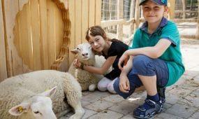 Nyári hűsölés, újdonságok a Familypark Neusiedlersee-ben