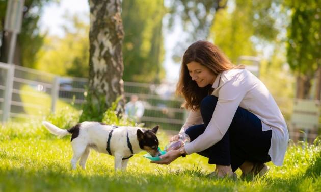 Tanfolyamra kötelezik az új kutyatulajdonosokat Bécsben
