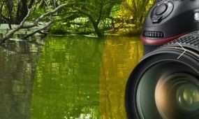 A Tisza-tó természetfotós szemmel