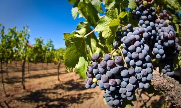 Speciális hiteltermék a szőlő- és bortermelőknek
