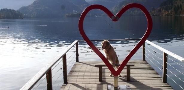 Az utazás a kutyák kiváltsága