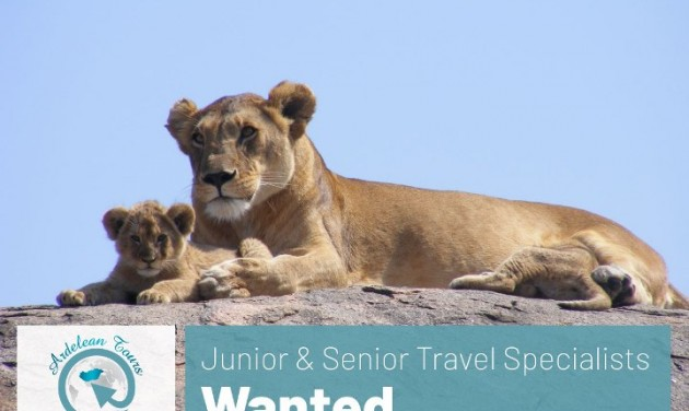 Junior és Senior Travel Specialist, Érd