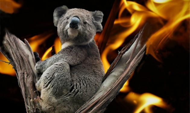 Információk Ausztráliába utazóknak