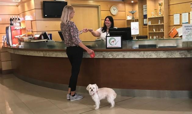 Mit kell tudnia egy kutyabarát szálláshelynek?