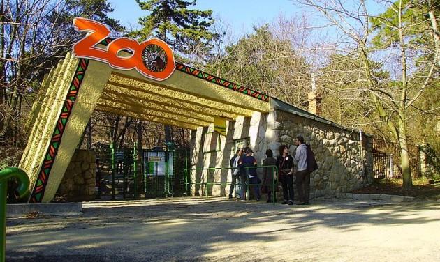 Rekordbevételt ért el tavaly a pécsi állatkert