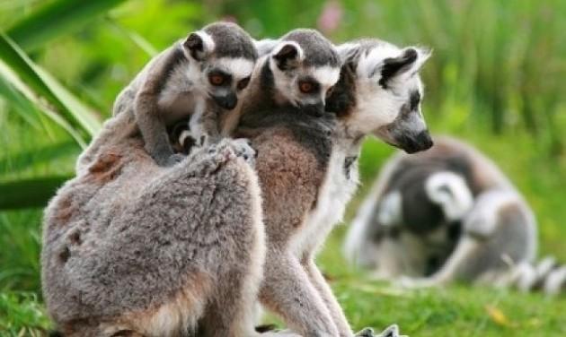 Indulnak az újabb fejlesztések a győri állatkertben