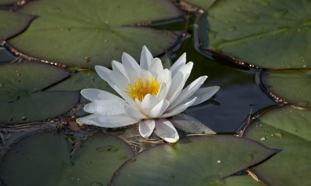 Újra megtelt termálvízzel a püspökfürdői tó