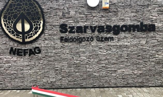 Szarvasgomba-feldolgozót avattak Szolnokon