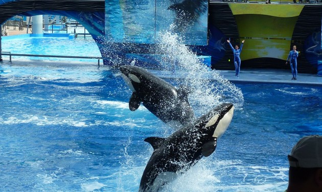 A TripAdvisor nem fog jegyet árulni delfin- és orkashow-kra