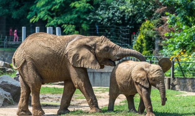 Februárra épülhet meg a Nyíregyházi Állatpark India-háza