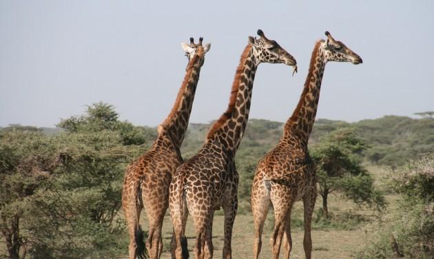 Afrika francia nyelvű részén terjeszkednek a hotelláncok