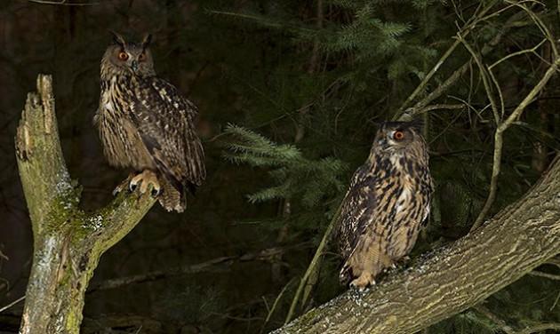 Éjszakai kalandtúrára hív a vadaspark