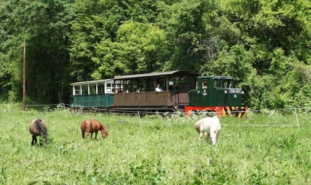 Idén sokak kedvence volt a lillafüredi erdei vasút