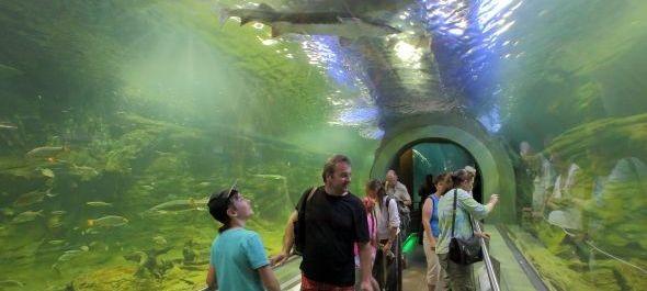 A félmilliomodik látogatót köszöntötték a Tisza-tavi Ökocentrumban