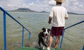Két kutyafürdető hely nyílik a Balatonon