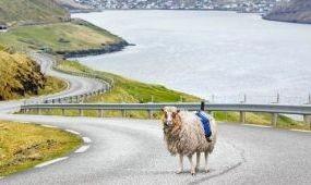 Birkák készítenek utcaképeket a Feröer-szigeteken