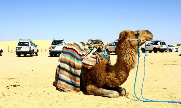 Djerba: a napfényes sziget, amit látni kell