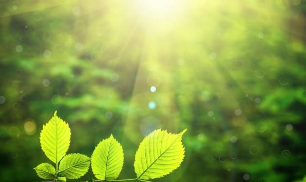 Egészséges erdei séták – a körültekintés jegyében