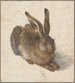 Egy évtized után újra látható Dürer Mezei nyula az Albertinában